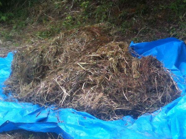 刈り取り後の草