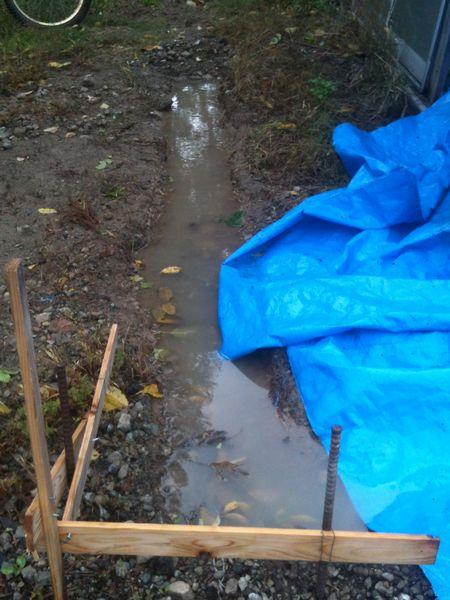 水 落ち葉で汚れ放題